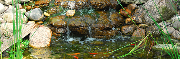 Pond Design | Alpine Aquatics Pond & Pet - Blaine County, ID